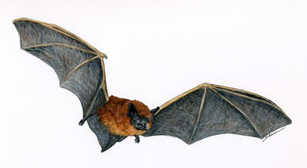 Bat flying around