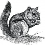 Squirrel (9)