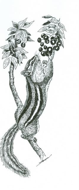 Chipmunk reaching for berries