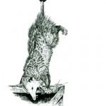 Opossum thumbnail