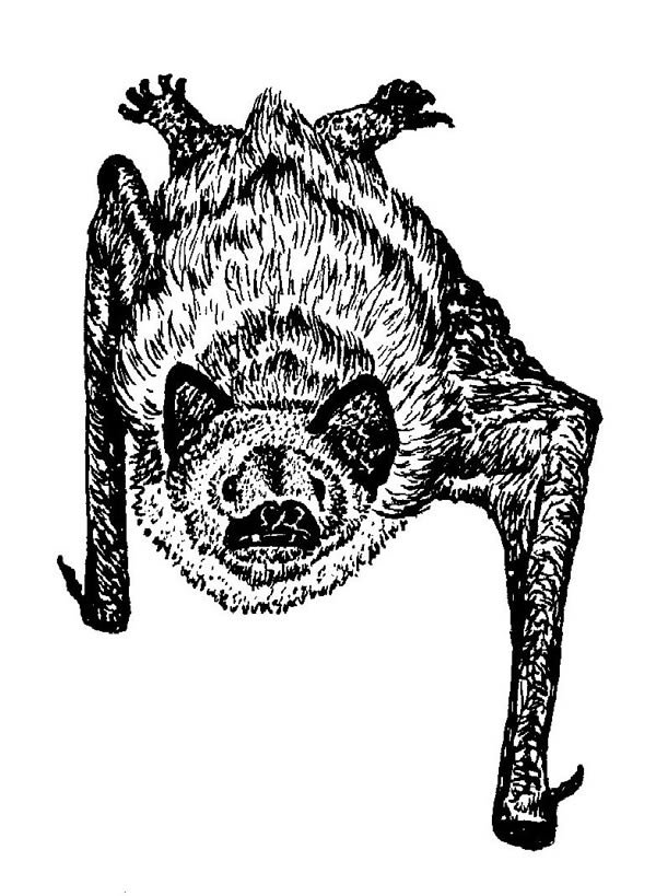 Bat hanging from ceiling drawing