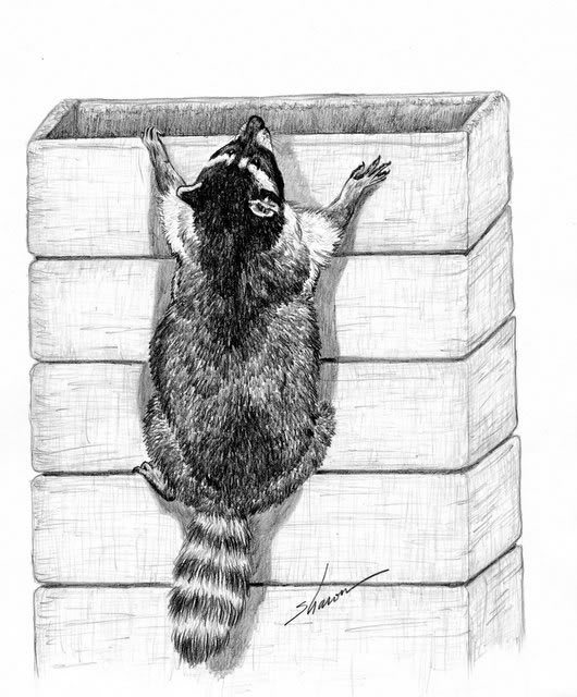 Raccoon climbing a chimney artwork