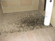 bat droppings on floor
