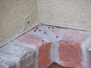 bat droppings on wall