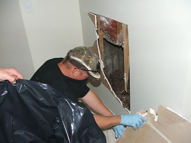 Allstate Animal Control technician cutting away a wall to remove a dead animal