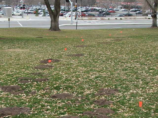 gopher mounds lawn damage