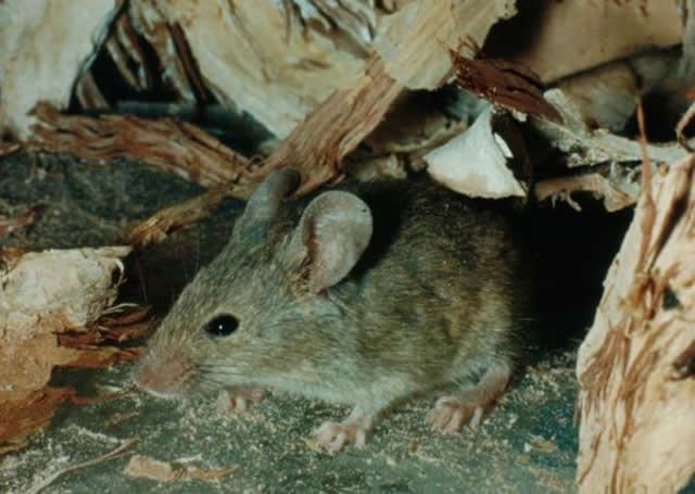 Pipe Insulation Mice Pipe Insulation Supplierspipe