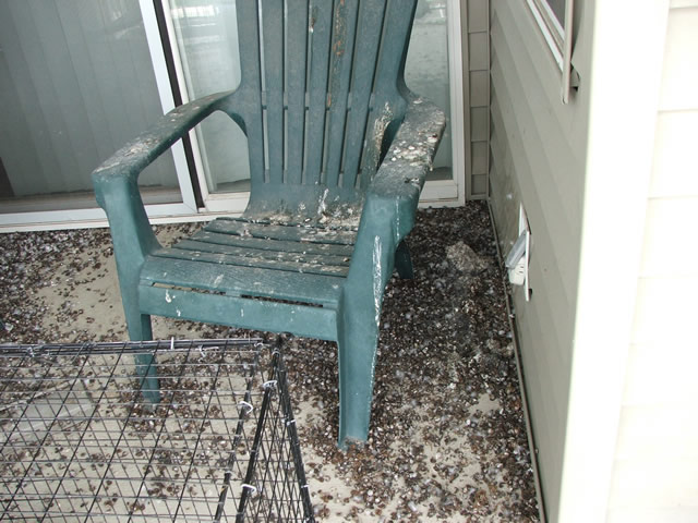 how to clean bird droppings from balcony