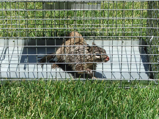 Poison Control Utah >> How to Get Rid of Squirrels | Squirrel Control | Squirrel Removal