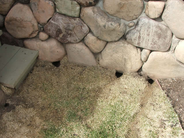 vole holes under a wall