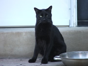 Allstate Animal Control photo black cat