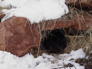 Allstate Animal Control photo porcupine den