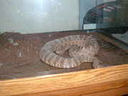 Allstate Animal Control photo snake in aquarium
