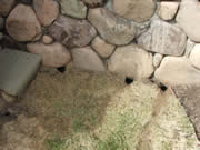 vole holes under stone wall