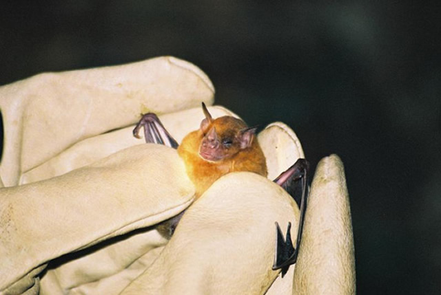 Frequently Asked Questions About Bats Bat Faq Allstate
