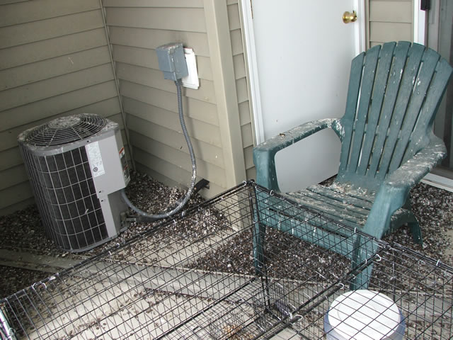 Allstate Animal Control, pigeon droppings covering balcony