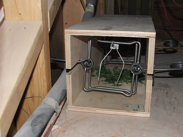 How To Get Rid Of Rats Rat Poison Rat Traps