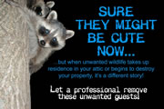 Allstate Animal Control image raccoon