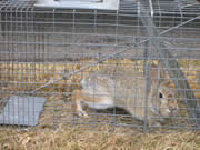 Allstate Animal Control photo rabbit cage