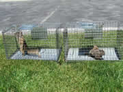 Allstate Animal Control--squirrels caught