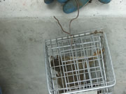 Allstate Animal Control squirrel trap